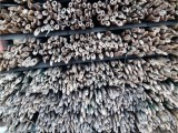 批发江西绑竿 供应西北地区绑缚枸杞树苗用的小竹竿
