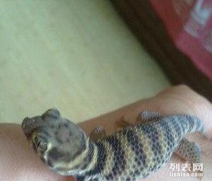 鬣绿蜥蜴守宫蛇刺猬吃菜龟包邮