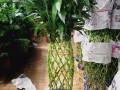 哈尔滨批发花卉绿植免费送货