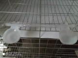 鸽子笼厂 章贡鸽子笼厂 鸽子笼厂家