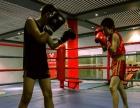 重庆哼哈体育专业武术,跆拳道,散打等体能培训,可试课