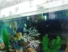 2米长鱼缸转让