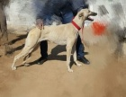 转让格力犬喜欢的联系非诚勿扰!