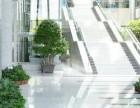 深圳罗湖区绿植租赁
