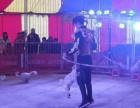 杭州市哪里有动物表演出租