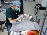 深圳南山粤海24小时营业急诊宠物医院 正规医院