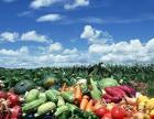自己可以自己耕种的菜地