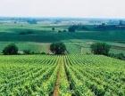扎西红生态农业|生态农业发展|家庭生态农庄|生态农