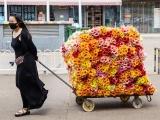 蚌埠鲜花批发,100支玫瑰只要一元,花农现采,品质保障
