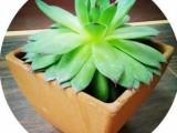 透气环保小花盆室内阳台盆栽多肉绿植四方花盆