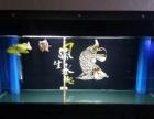 观赏鱼 3000元