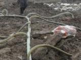 武汉洪山专业工程降水 轻型井点降水