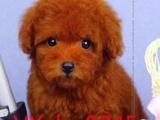 犬舍出售各种高品质狗狗 疫苗齐全 包健康纯种签协议