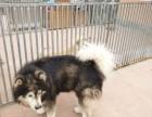 西罗园宠物猫狗 长期代养宠物更优惠可接送 春节寄养预订中