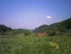 出租转让能放牛羊的山沟草原,山场土地林蛙养殖基地