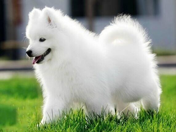 北京官方认证狗狗领养中心 只需身份证实名领养
