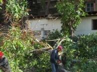 承包萝岗区科学城物业保洁园林绿化养护维护除草砍树