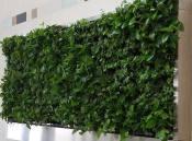 【时尚时尚】装修用植物墙 绿色生态植物墙 室内植物墙做法