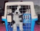 北京寵物托運,空運,隨機托運 檢疫證代辦 火車托運全國