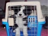 北京宠物托运,空运,随机托运 检疫证代办 火车托运全国