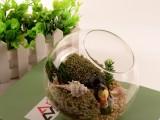 苏艺 出厂价微景观玻璃瓶斜口玻璃瓶 植物