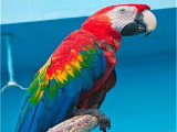 涪陵本地出售观赏鸟健康保障