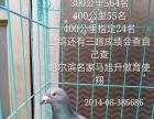 出售哈尔滨名家赛绩血统鸽
