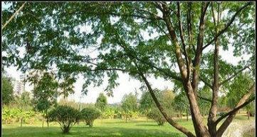 安县猫儿沟农家乐出租面积10000平米图片