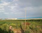 银浪牧场温室大棚 土地 5000平米