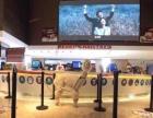 浦东影院圣诞庆典租羊驼展示,上海启欣展览展示有限公