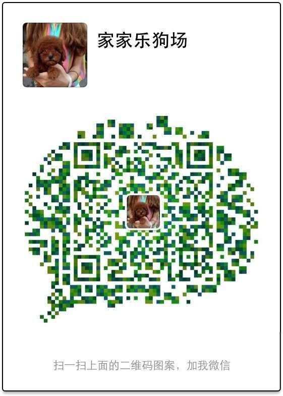 东莞宠物狗养殖场出售纯种拉布拉多犬 疫苗做齐保证健康可送货