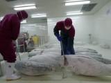 广州市鱼虾保鲜库厂家建设