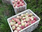 精选优质油桃
