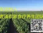 黑冬谷黑小麦野生燕麦血钻野燕麦黑金谷种植批发价格