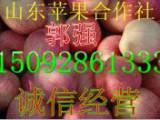 今日山东早熟嘎啦美八苹果上市