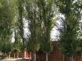 大院库房出租/牛场林站4亩大院一处