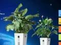 北京生泰宝植物空气净化器加盟加盟 家用电器