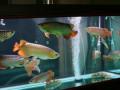 专业清洗鱼缸 鱼缸定制 治病 消毒 安装 搬运