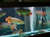 鱼缸养护 安装搬运 各类观赏鱼任意选