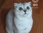 纯白萌猫 罕见的返祖,粉鼻子粉嘴粉爪颜值爆表