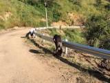 厂家直供甘肃天水防撞护栏 波形护栏 道路护栏 高速护栏
