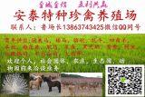 特种养殖场大量供应孔雀,鸵鸟,羊驼,矮马 鸳鸯等珍禽