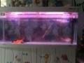 8成新 鱼缸 900元转让1米5佳宝缸一个