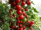 上海滴水湖附近农家乐 采西瓜摘五彩番茄 划船烧烤钓鱼