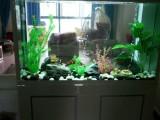 長沙魚缸清洗安裝維修