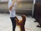 国庆代上门遛狗喂猫