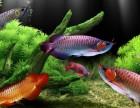 北京鱼缸定期养护,喂食,治愈鱼病.公司 家庭,淡水鱼定期清理