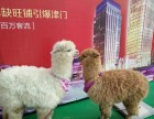 深圳暑假哪里去看萌宠深圳商场看羊驼矮马萌宠表演租赁