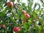 峰阳25亩果树转让