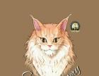 AtumCattery猫舍出售英国短毛猫蓝猫蓝白